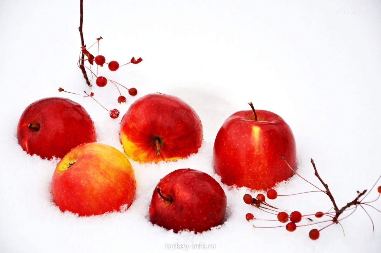 Яблоки фон для открытки