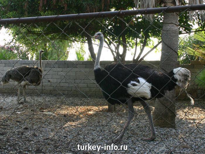 Ферма по выращиванию и разведению страусов 83